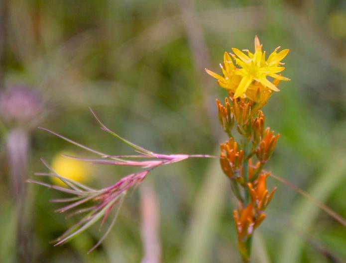 yellow beach flower with grass