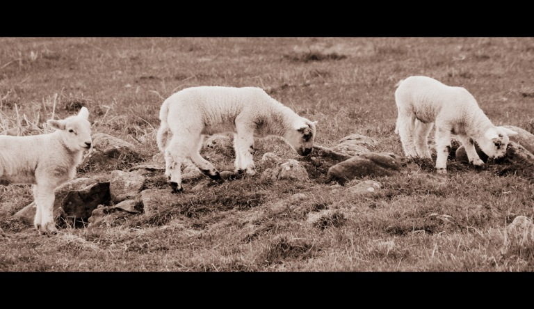 lambs holy island cinematoscope2