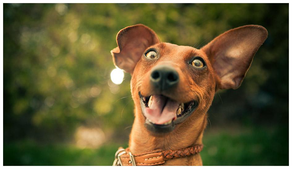 moka-happy-dog3