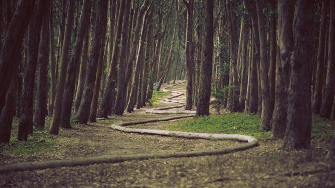 presidio-forest-san-francisco-wood-line-andy-glodsworthy.rend.tccom.966.544