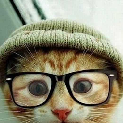 cute-cat-with-beanie-and-glasses-635731307117442594-13752