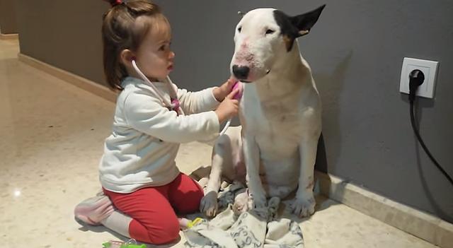 dog-pretend-vet-1