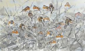 james mccallum branblings and chaffinches.jpeg