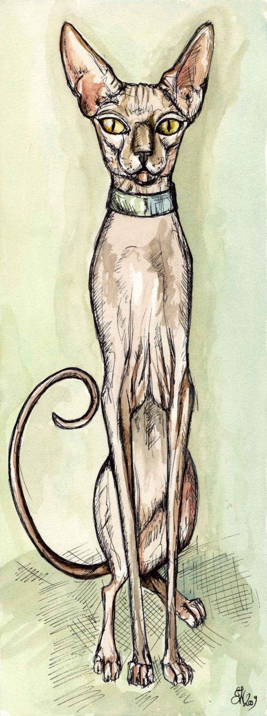 sphynx cat by almostanange66