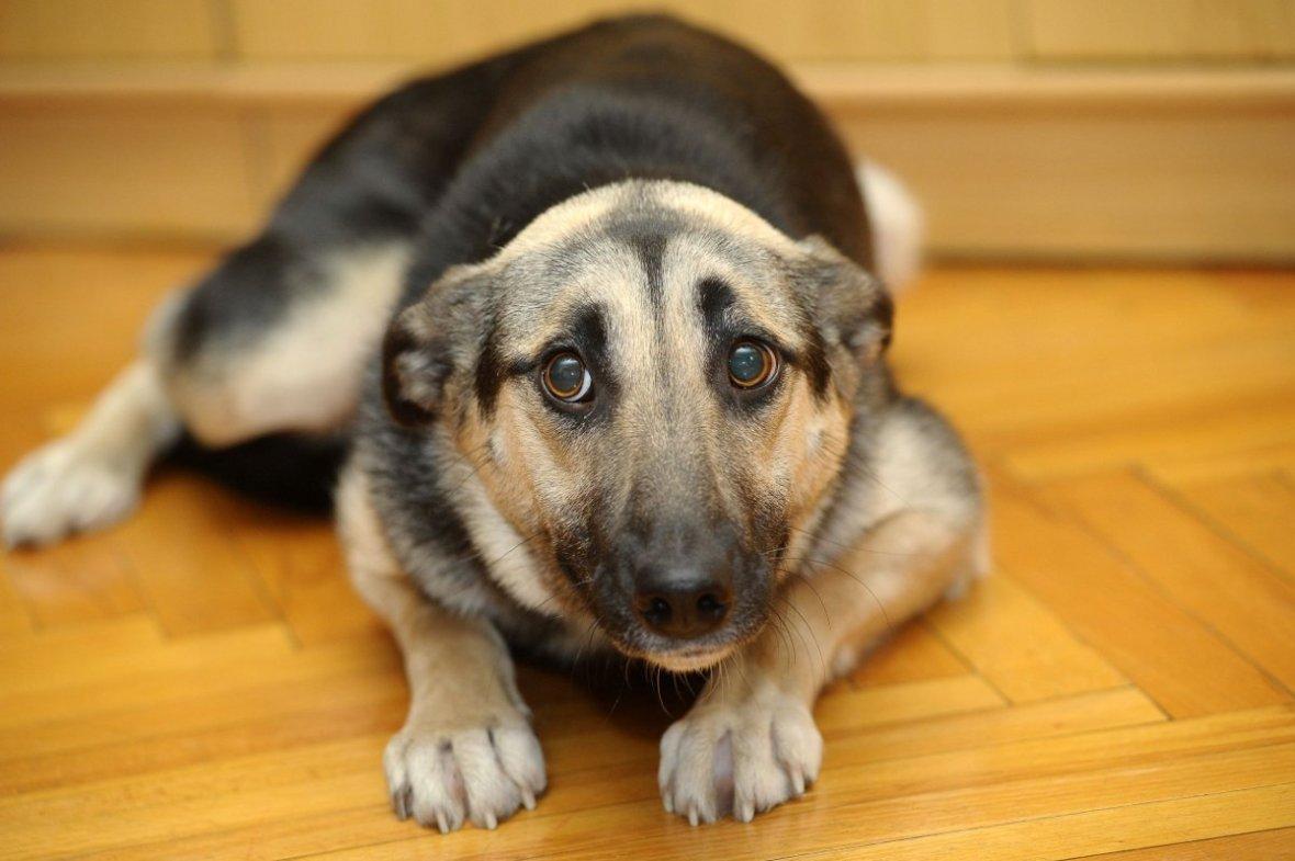 Frightened-dog.jpg