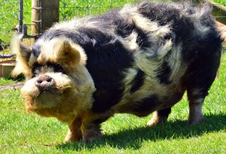 another kune.jpeg