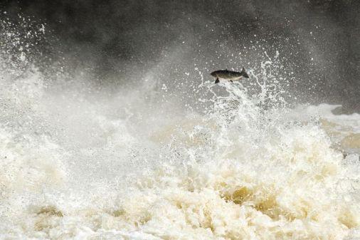 salmon river.jpeg
