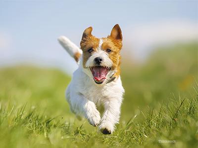 happy dog.jpg
