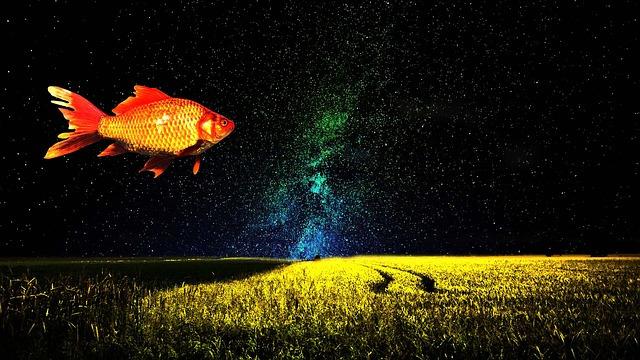 fish field stars.jpg