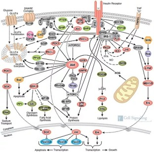 obesity pathway.jpg