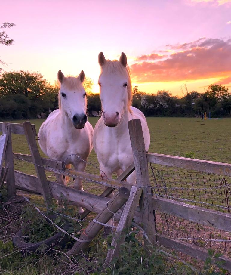 evening horses.jpg
