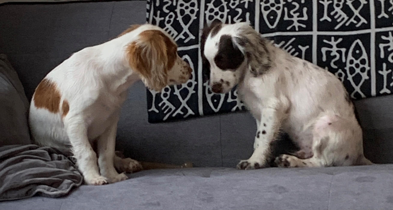 twa dogs